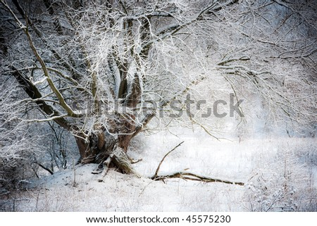 Fairy Tale like willow tree in winter scenic