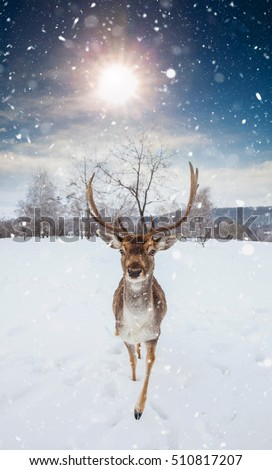 fairy tale picture with deer in ...