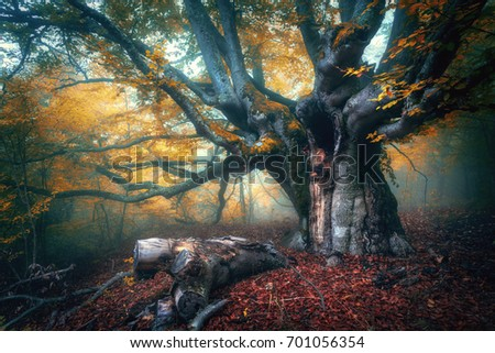 fairy tree in fog. old magical...