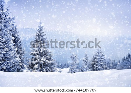 Shutterstock Fairy winter landscape with fir trees and snowfall. Christmas greetings concept