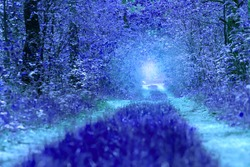 Fairytale blue forest background.Unreal forest.