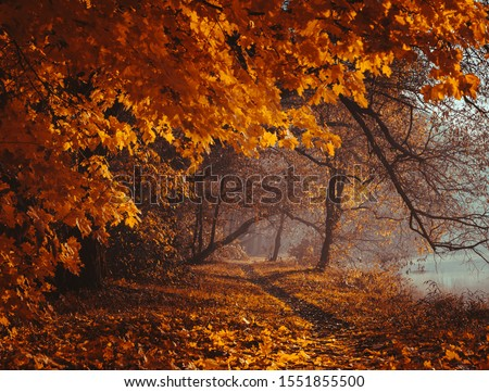 Fairytale forest. Autumn atmosphere. Mystical forest. Fairy tale road. Mysterious morning park. Mystery walk. Fog in a dreamy park. Background wallpaper.