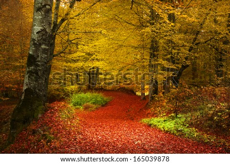 Stock Photo Fairytale forest for child and fantasy books