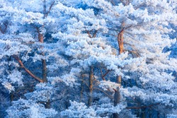Fairytale winter landscape in the forest with snow on the trees at Christmas time