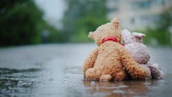 Faithful friends - a bunny and a bear cub sit side by side on the road, wet under the pouring rain. Look forward, embrace. Rear view
