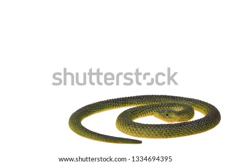 Fake green snake, rubber animal toy. Isolated on white background. Copy space. Copy space