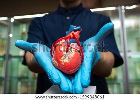 fake hearts in the hands of a student medical student. hands in blue gloves