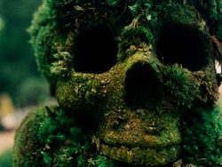Fake human skull covered with moss and grass