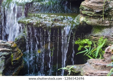 Fake or man-made waterfall with Moss, Lichens, Ferns and some plants on the rock.