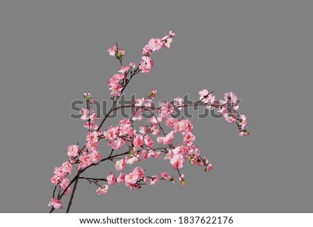 Fake peach blossom branch  to decorate for celebrating Lunar New Year. It's also called Tet holidays in Vietnam, isolated on gray background