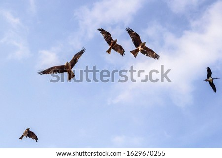 Falcon troop birds flying on the blue sky background