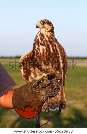 Falconer with Falcon
