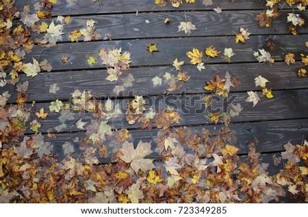 Fall #723349285