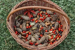 Fall autumn colorful background. Variety of fall fruits (acorns, cones, sloes) in wooden basket. Forest harvest time. Natural rustic arrangement.Fall Still Life.Thanksgiving day concept. Rural decor