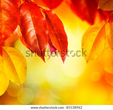 Fall.Autumn leaves