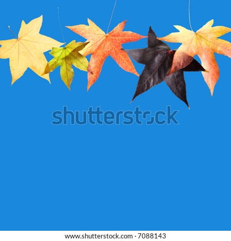 Fall / Autumn leaves, over blue background
