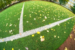 fall Autumn Soccer field with grass green, football artificial lawn. nature