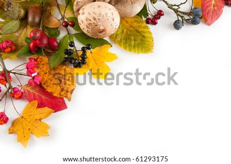 Fall background 20.