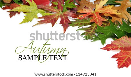 Fall border or background with autumn leaves