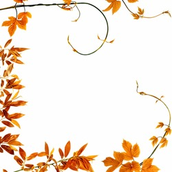 fall branches frame