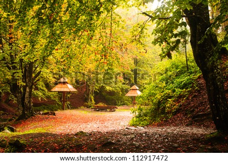 Fall camping with rain in the forest