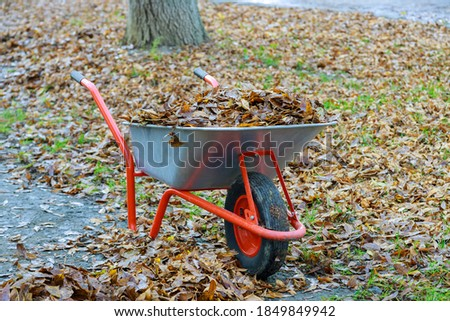 Fall cleanup removing leaves in autumn park on wheelbarrow full of yellow fallen leaves. Stock photo ©