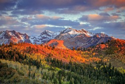 Fall color with morning light in the Wasatch Mountains, Utah, USA.