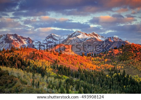 Fall color with morning light in the Wasatch Mountains, Utah, USA. #493908124