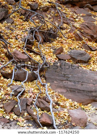 Fall Color Zion National Park, Utah