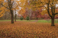 Fall colors in a public park Gresham Oregon state.