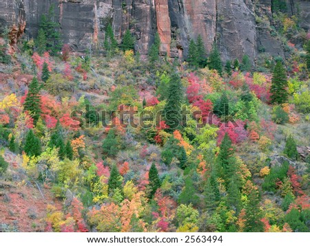 Fall colors in Zion National Park, Utah