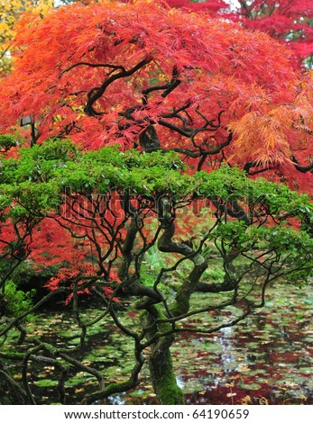 Fall colors of japanese maple and garden