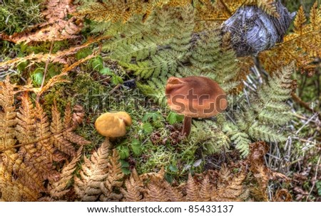 Fall colors on the forest floor in fall with mushrooms, ferns and moss.