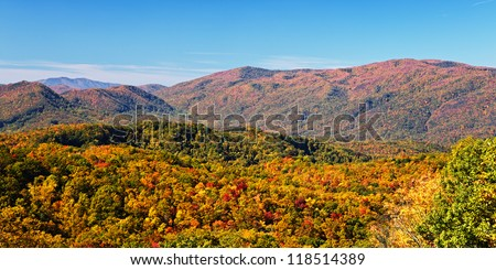 Fall colors woods in the Smoky Mountains National Park, Tennessee, USA