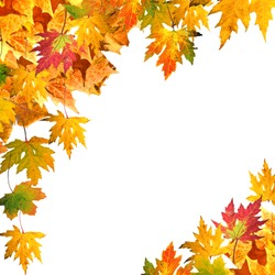 Fall composition: Collection of different colorful autumn leaves isolated on white background