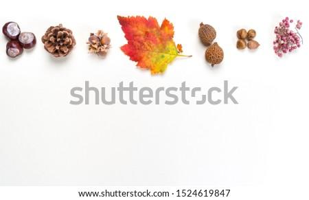 Fall decoration on white background Stok fotoğraf ©