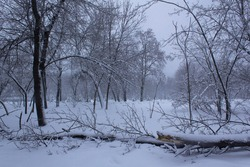 Fall down tree into city park after winter heavy snowfall wintery day white snow inspirational landscape