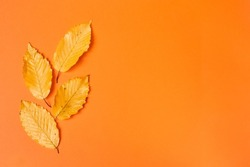 Fall flat lay composition with realistic leaves on orange background. Hello october concept. Autumn background. Copy space