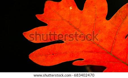 Fall Foliage #683402470