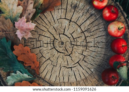 Fall foliage and apples on wooden stump. Autumn background, thanksgiving concept. Oak and maple leaves, cut, apple picking, September, October, November