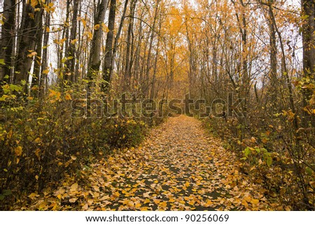 Fall foliage at  Smith and Bybee Wetlands Natural Area.