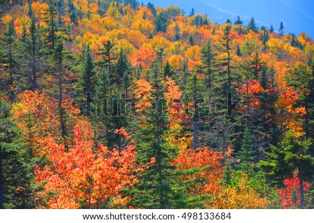 Fall foliage in White mountain national forest #498133684
