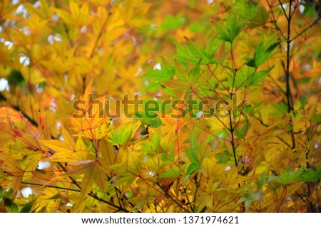 Fall foliage or autumn foliage in Kyushu, Japan #1371974621