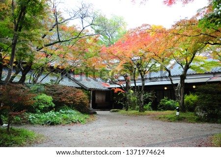 Fall foliage or autumn foliage in Kyushu, Japan #1371974624