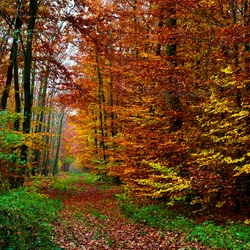 Fall forest background in park
