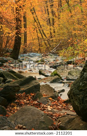 Fall Forest Stream - stock photo