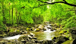 fall forest stream Smolny in russian primorye reserve