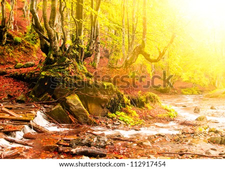 Fall forest with old big tree near streamlet