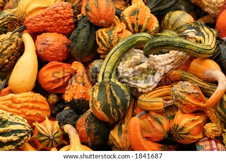 fall gourd background
