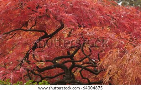Fall in a japanese garden